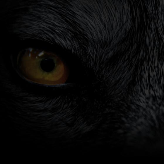Wolfburn